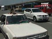 Köpeğini serinletti cezayı yedi!