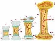 Motorlu çivi yöntemi ile bacak boyu uzatma işlemi nasıl yapılır?