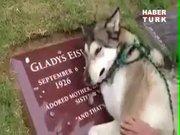Mezarı başında ağladı!