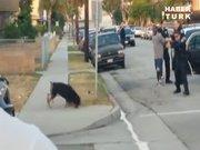 Polis köpeği böyle vurdu