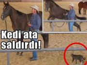 Çılgın kedi ata böyle saldırdı
