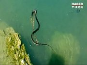 Yılanla yengecin av savaşı