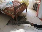 Yatağının altından 2,5 metrelik timsah çıktı!