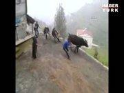 Kurbanlık hayvan 4 kişiyi böyle sürükledi