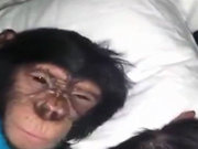 İnsan gibi uyanan maymun!
