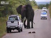 Fil geçit vermedi!