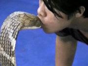 Kobra yılanını böyle öptü!