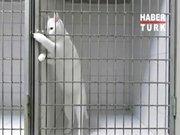 Çilingir kedi!