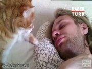 Kedi alarmı!