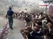 120 köpek aynı anda!