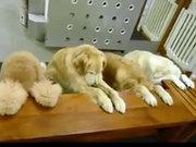 Köpeklerin yemek adabı