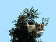 İlginç 'kedi kurtarma' operasyonu