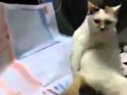 Poposunu kaşıyan kedi