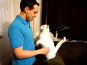 Sahibine sarılan kedi