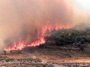 İzmir'de iki ayrı orman yangını