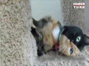 İki yüzü olan kedi