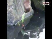 Orangutan civcivi kurtardı