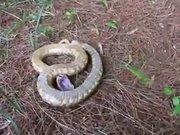 Dokununca ölen yılan