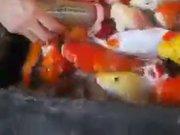 Biberonla beslenen balıklar