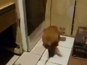 Fare kediyi ısırırsa