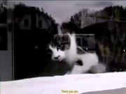 Kedi eve gelen mektupları kabul etmiyor