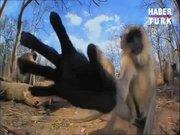 Maymunları korkutan gizli kamera