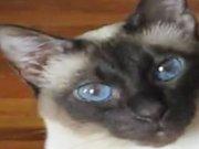 """Kedinin """"AŞK ÜÇGENİ"""""""