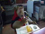 Maymun ferahlatıcı içeceğin tadını çıkarıyor!