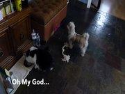 Çaresiz köpek, kediyi böyle izledi