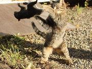 Kediyi parmağında oynayan sincap