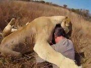 Aslanlarla harika dostluk