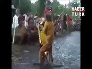Bu maymun bir motosiklet ustası