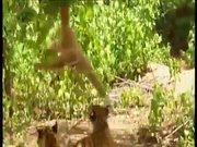 Kaplanlarla dalga geçti!