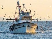 Balıkçıların yeni kabusu