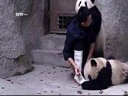 Şirinlik patlaması yaşayan pandalar