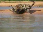 Vahşi doğada inanılmaz anlar!