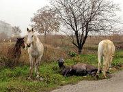 Atların dayanışması böyle görüntülendi