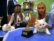 Bu kez kediler yarıştı