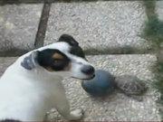 Kaplumbağa bir köpeği ısırdı