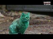 """""""Yeşil kedi"""" görenleri hayrete düşürüyor!"""