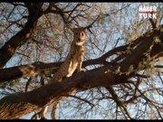 Safari Macerası
