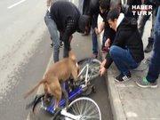 Pitbull bisikleti parçaladı!