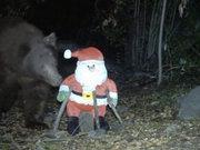 """""""Ayı"""" Noel Babayı yemek sandı"""