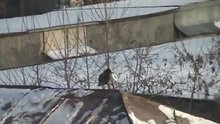 /video/komedi/izle/catida-snowboard-yapan-karga/133505