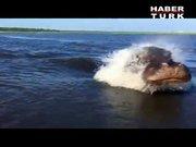 Su aygırı tekneye böyle saldırdı!
