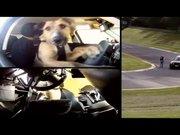 Araba süren köpek