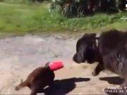 Kedinin yardımına köpek yetişti