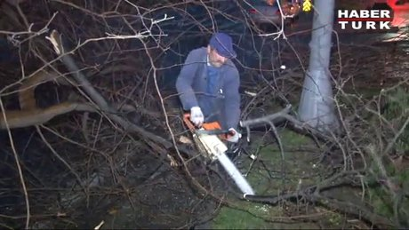 Şiddetli lodos ağaç devirdi!