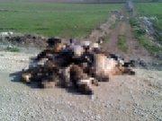 Bursa'daki köpekler neden öldü?