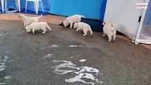 İlk defa su gören yavru köpekler!